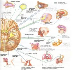 دانلود پاورپوینت آناتومی اعصاب محیطی
