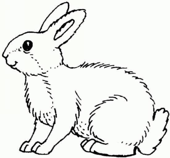 داستان صوتی خرگوشه و قدم های شبانه